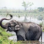 private-excursion-vip-thailande-thailand-green-elephant-sanctuary-park